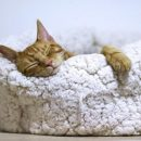a cat sleeping in a white fluffy cat bed