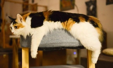 a cat spread out on a gray chair